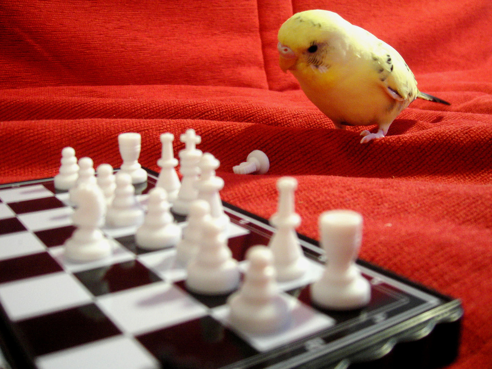 Pensive Parakeet.jpg