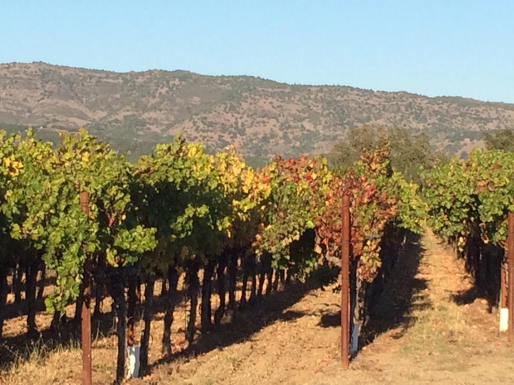 Fall vines 10.22.JPG