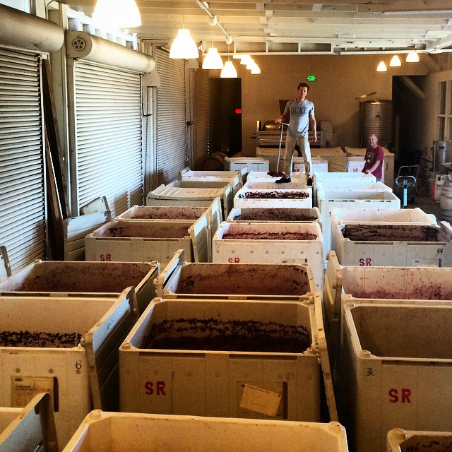 Grant and his grapes.  The winery is at max capacity this week, full of those 1 ton bins of grapes.