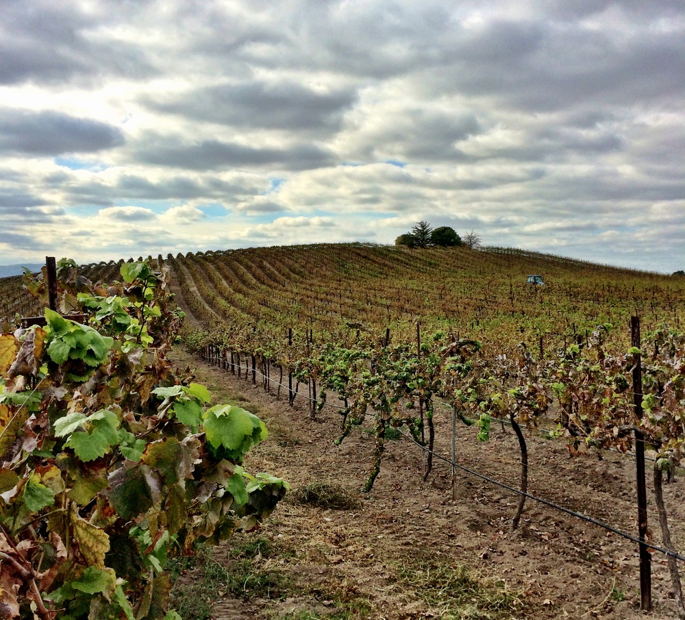 The vines of Paso Robles