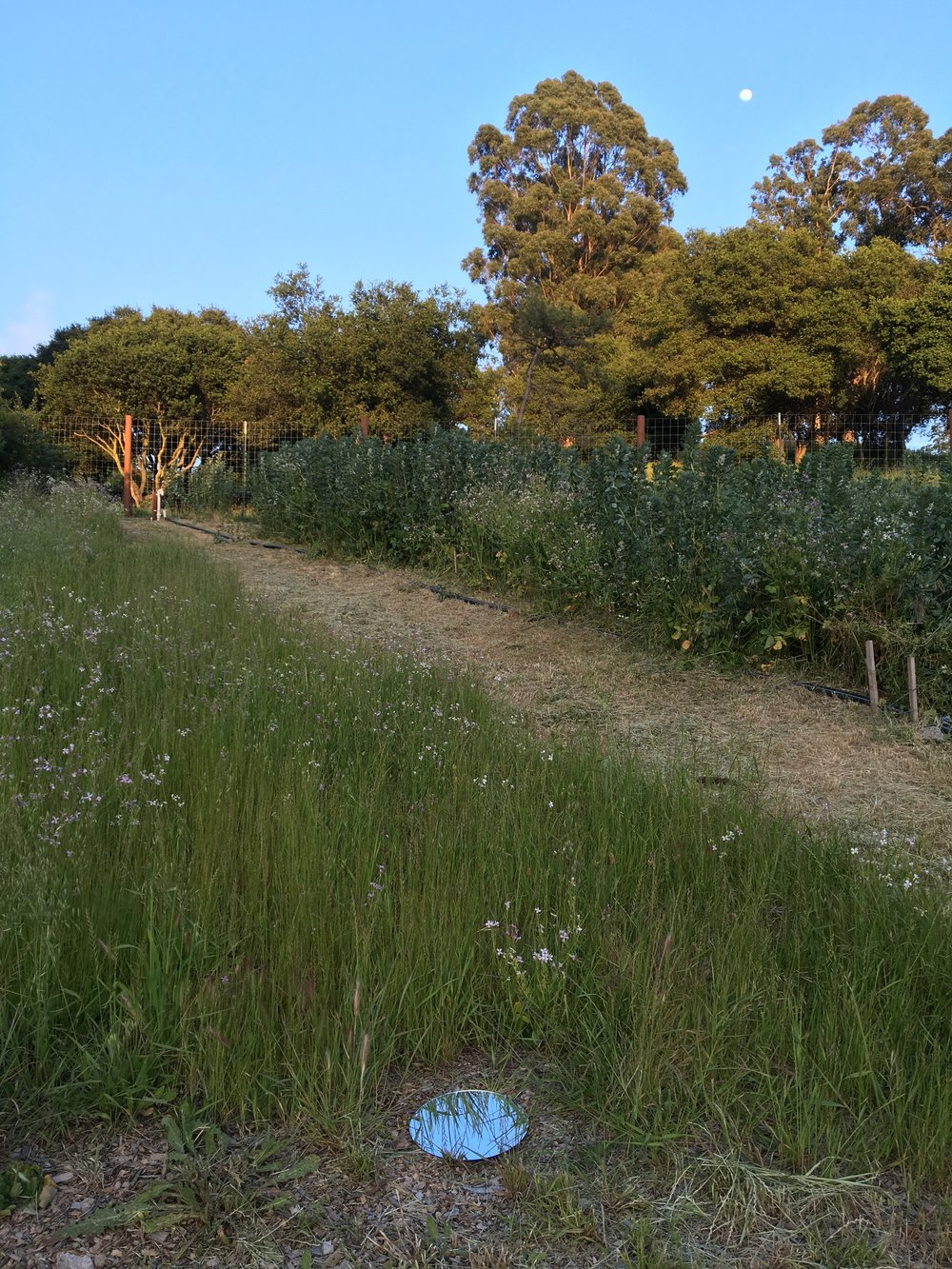 Site: Farm