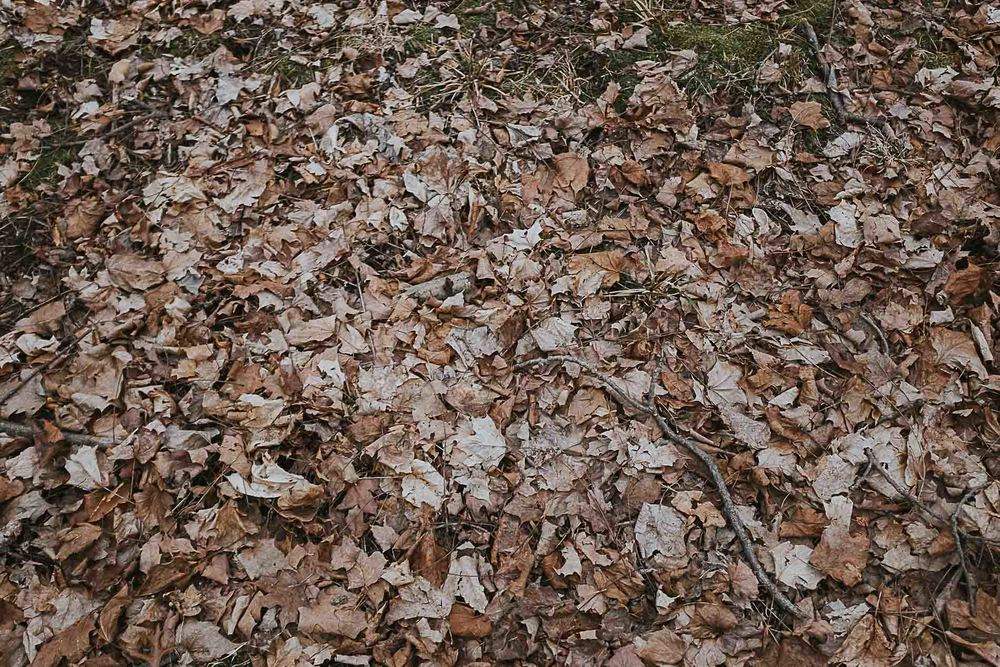 beautiful-fall-leaves-indianapolis-park