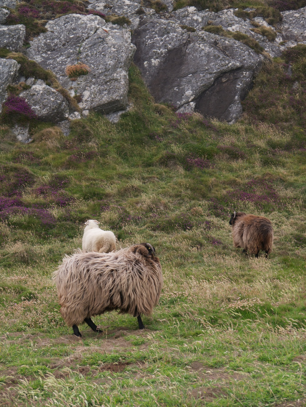 These were very odd sheep. So. Much. Wool.