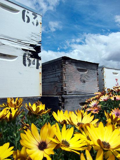 Bee hive shop.jpg