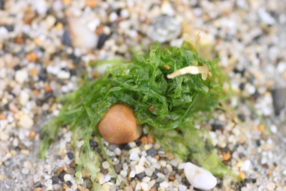 seaweed 1.jpg