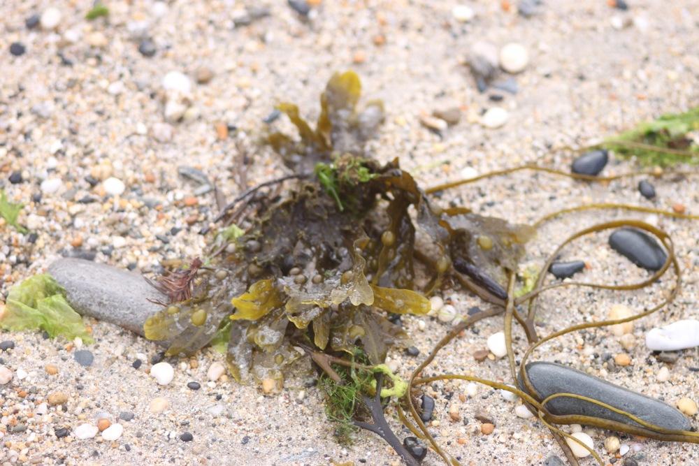 seaweed 3.jpg