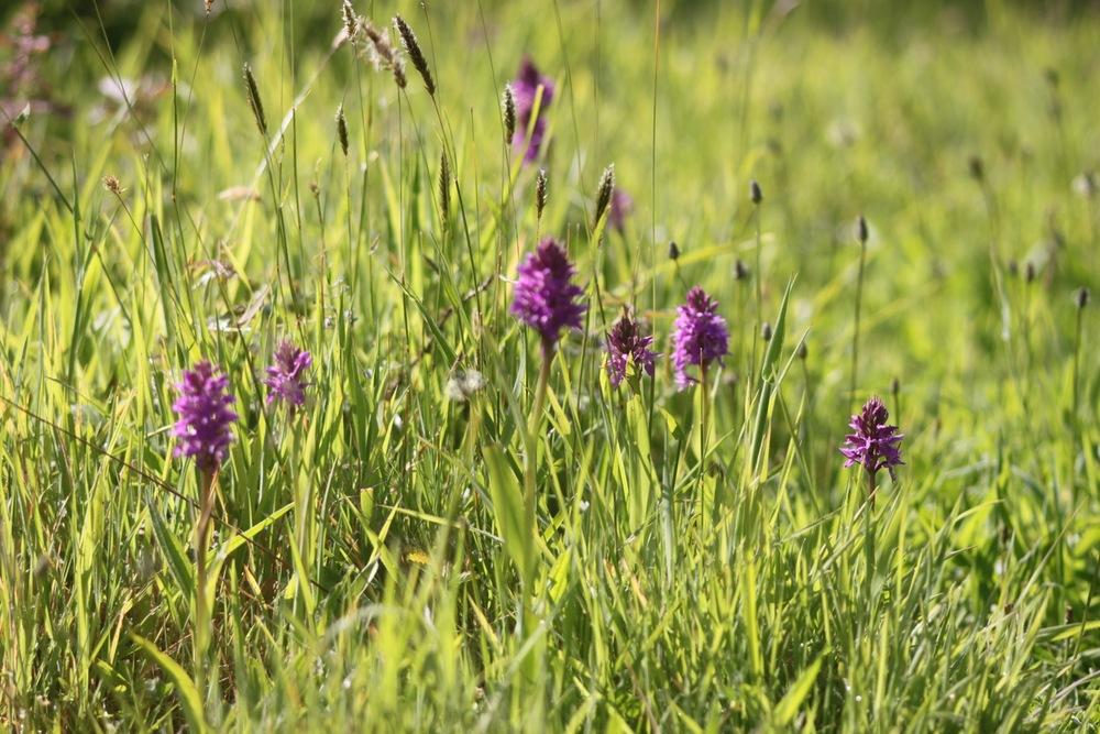 orchids 2.jpg