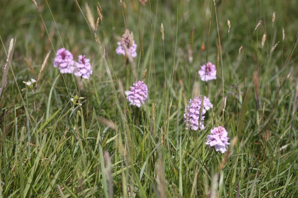 orchids 5.jpg