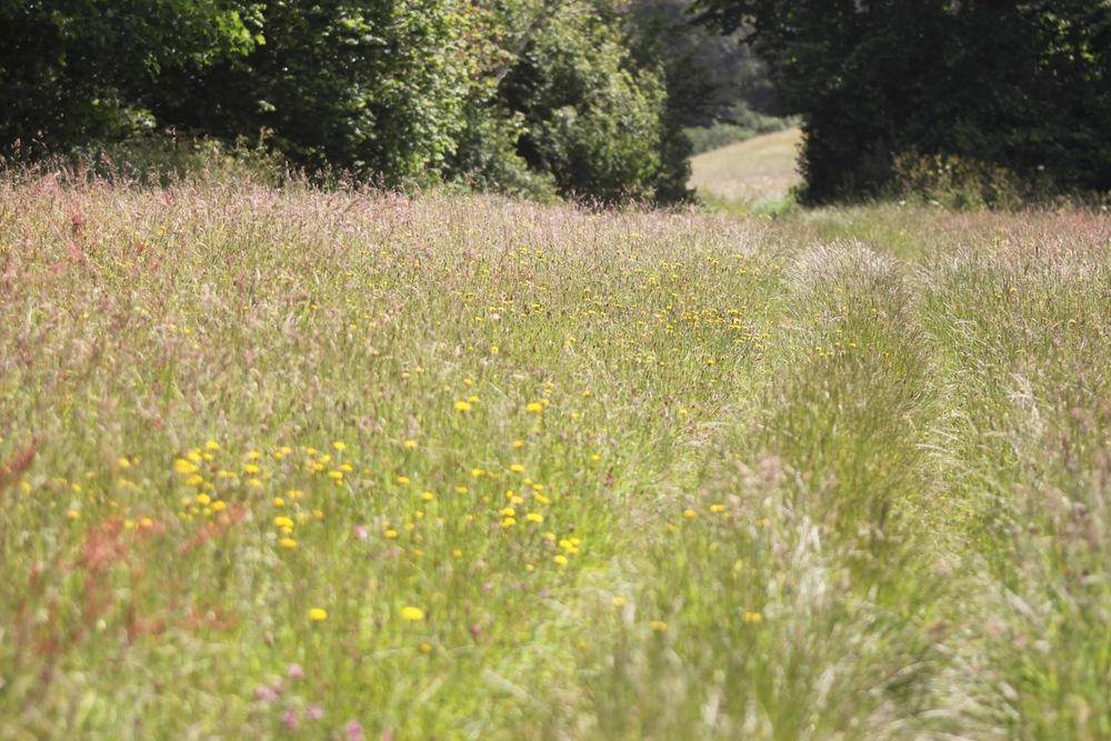 bosloe hay meadows 3.jpg