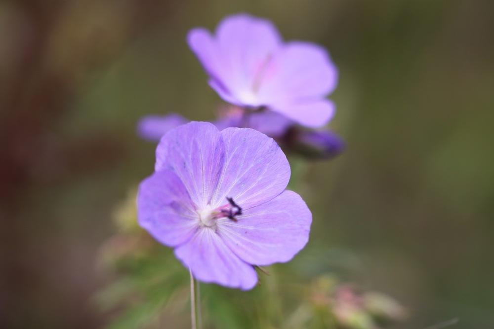flowers 15.jpg