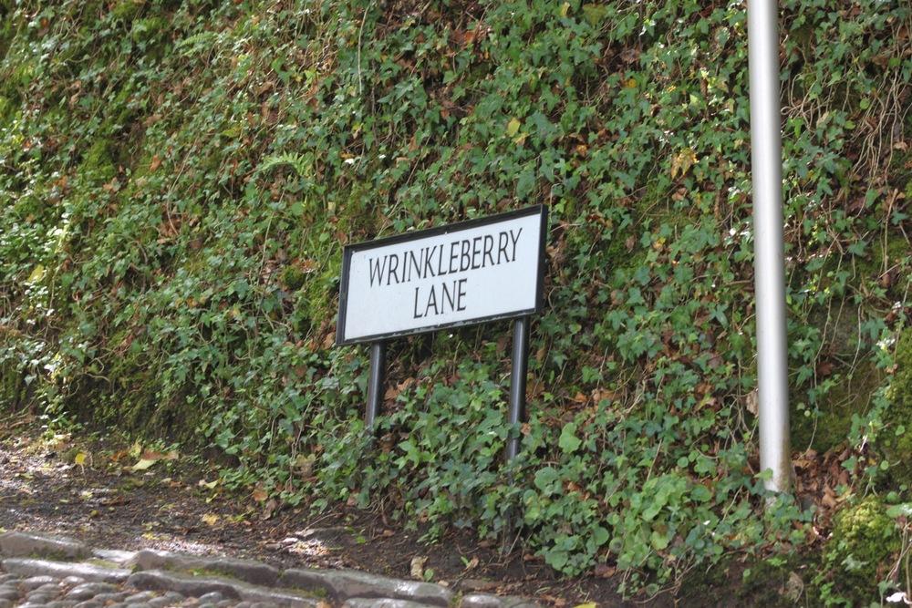 wrinkleberry lane