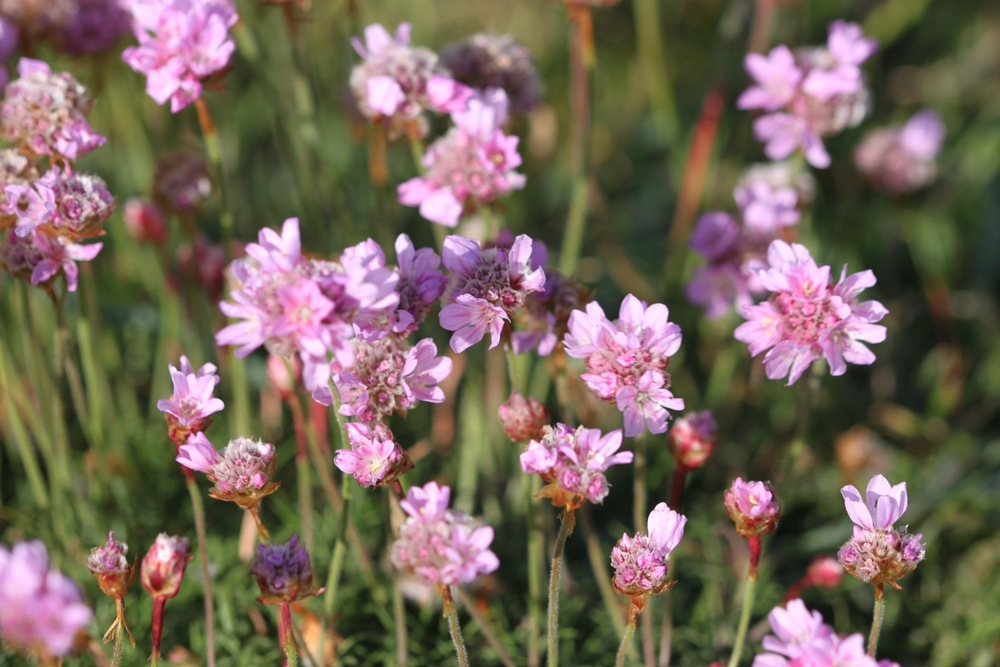 wild flowers 6.jpg