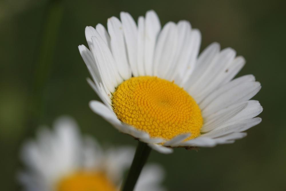 wild flowers 12.jpg