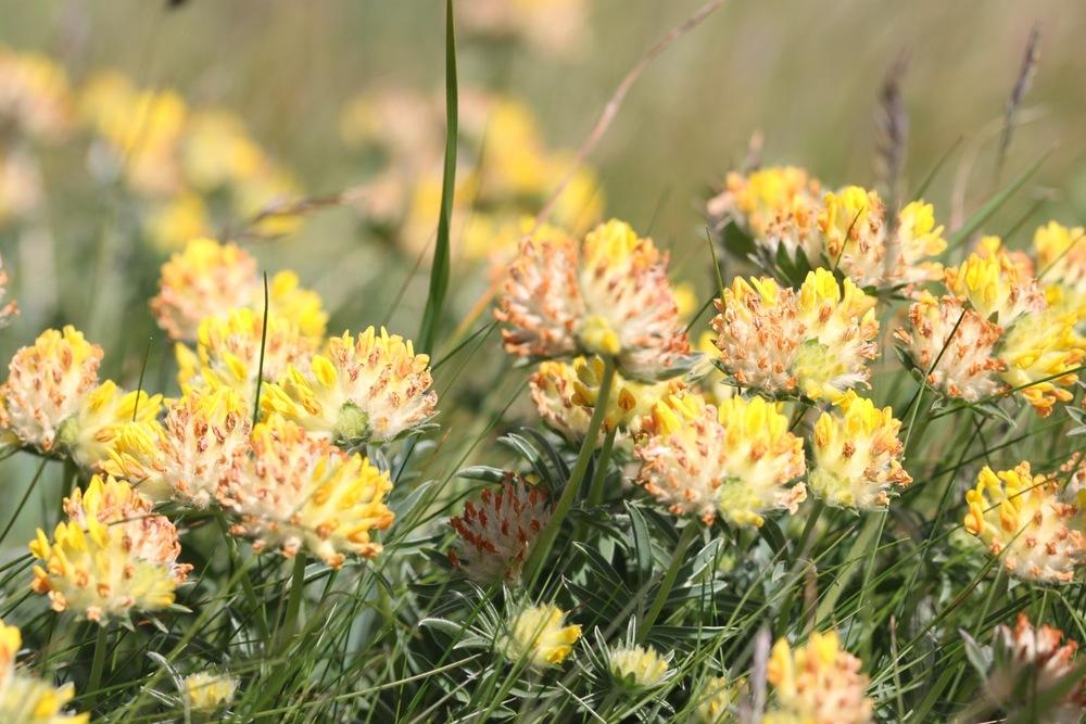 wild flowers 16.jpg