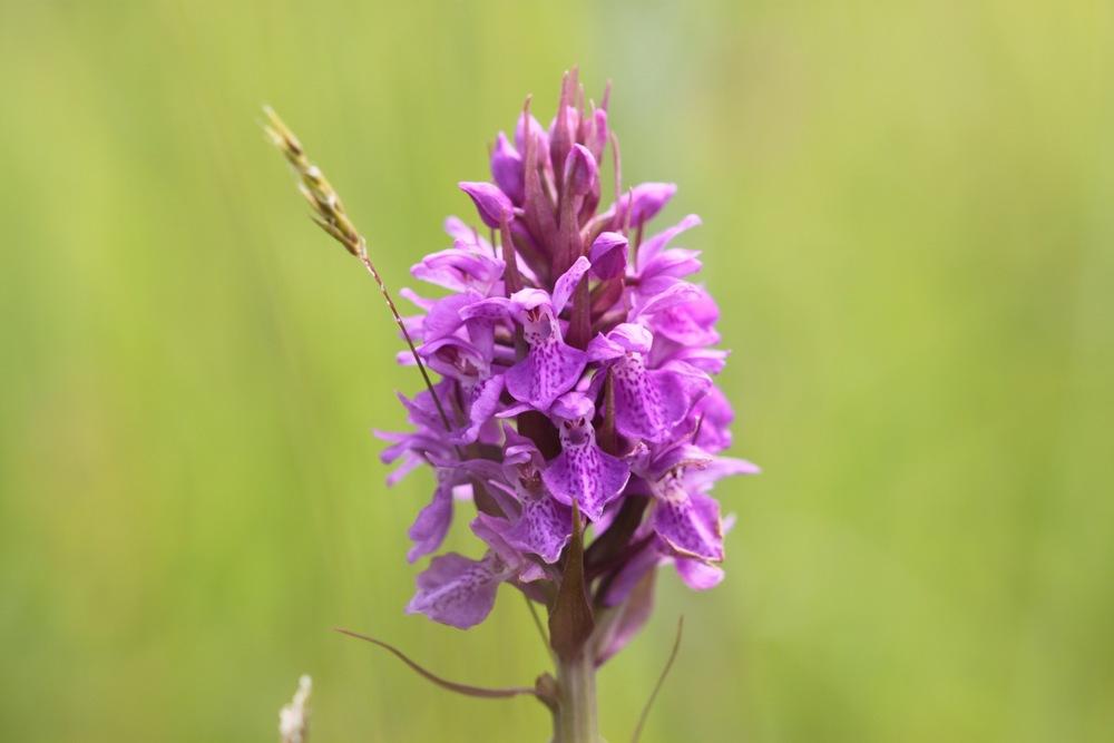 orchids 1.jpg