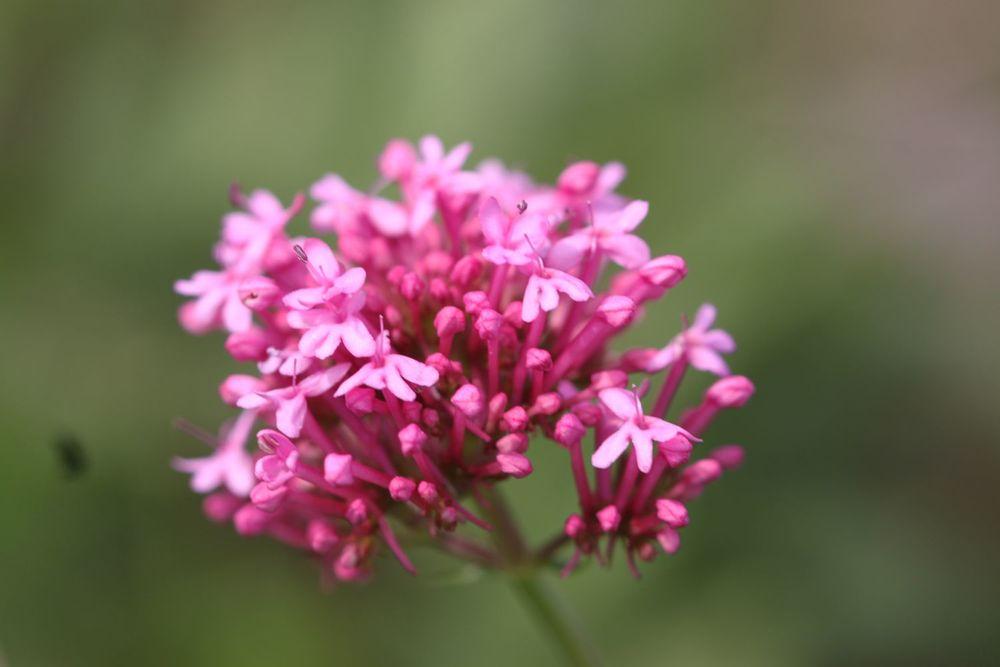 wild flowers 8.jpg