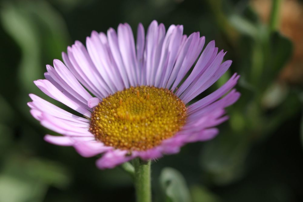 wild flowers 9.jpg