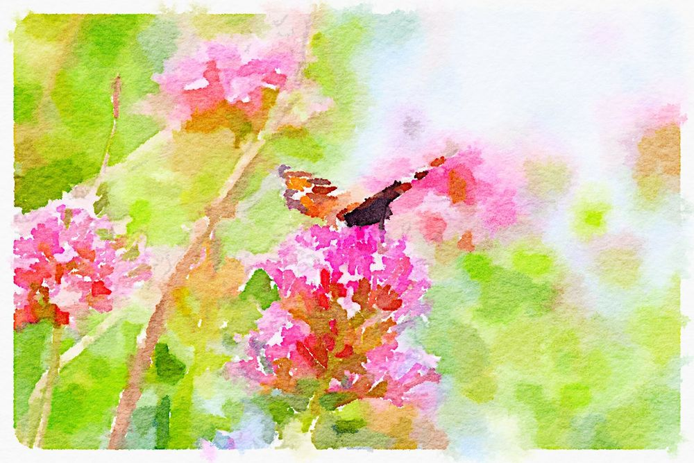 small tortoiseshell on red valerian