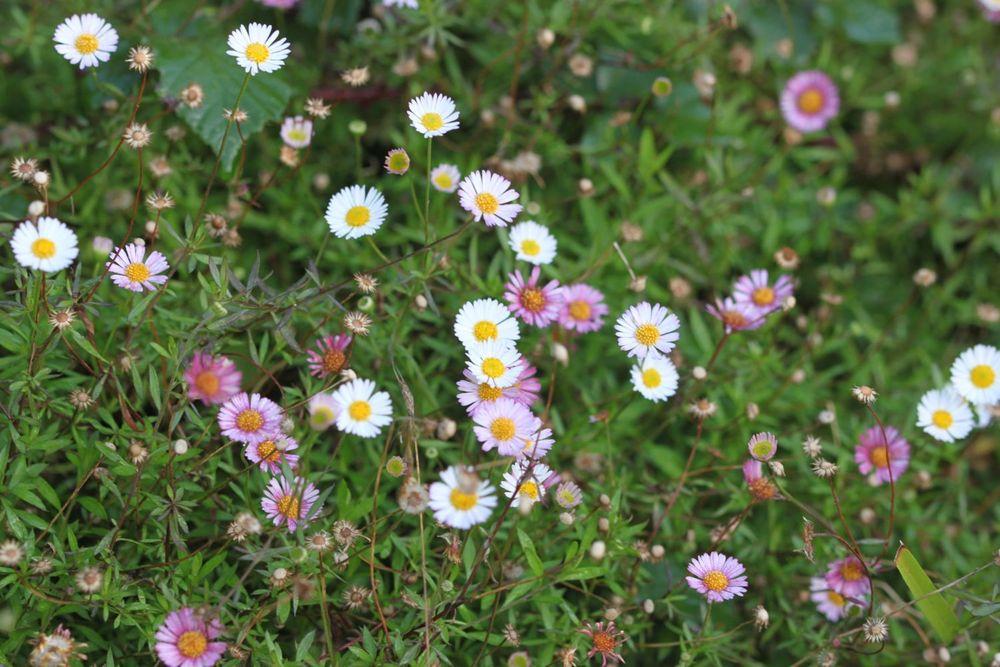 flowers 1.jpg