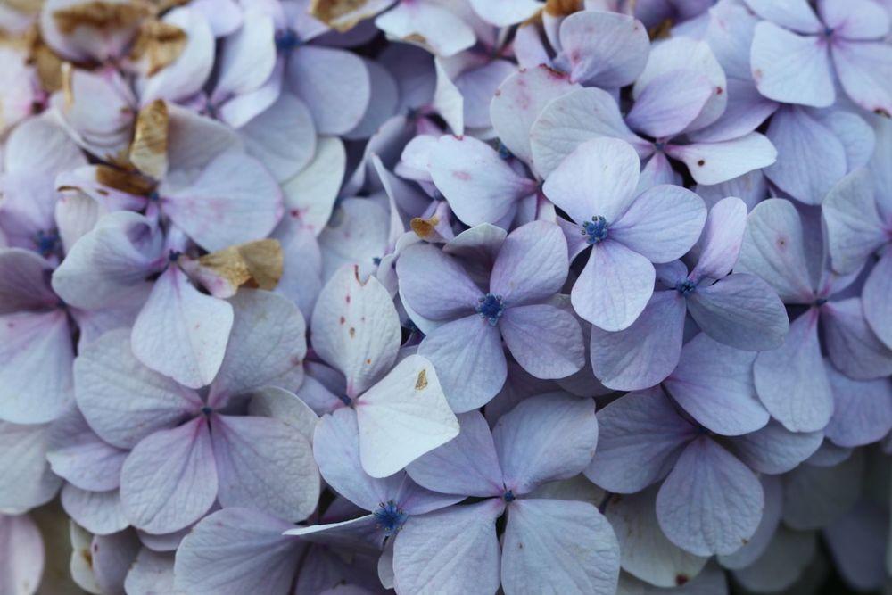 flowers 4.jpg