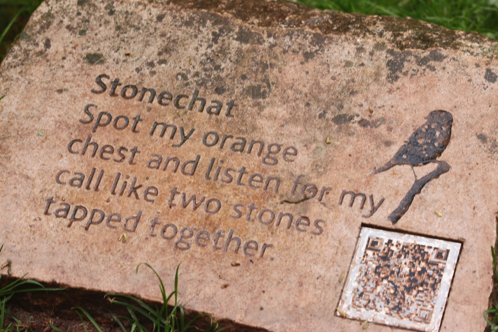 stonechat.jpg