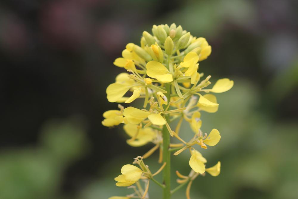 wild flowers 5.jpg