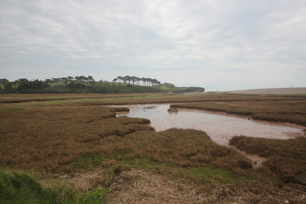 otter estuary nature reserve