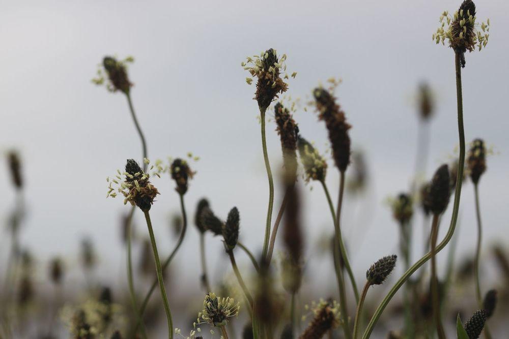 wild flowers 4.jpg