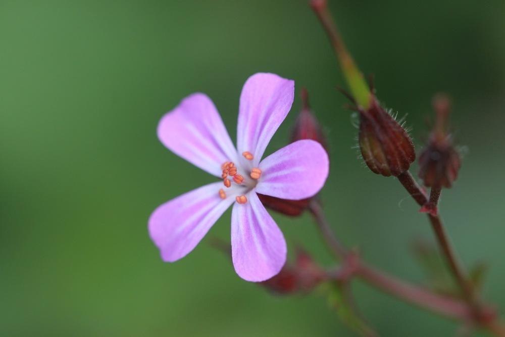 wild flowers 7.jpg