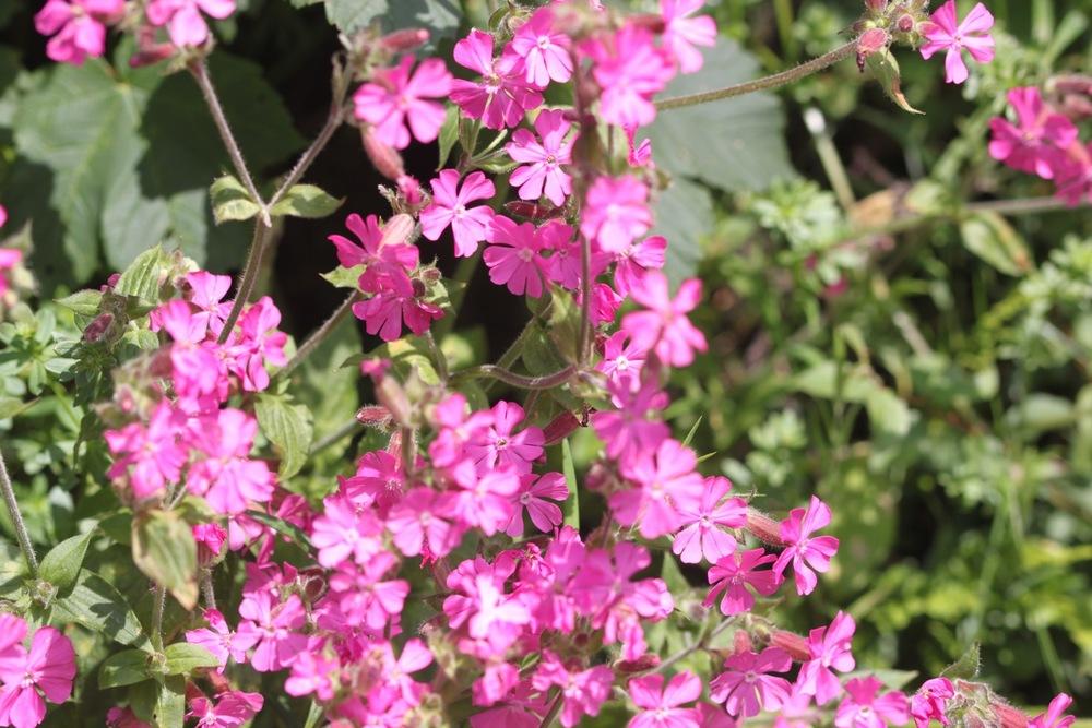 wild flowers 14.jpg