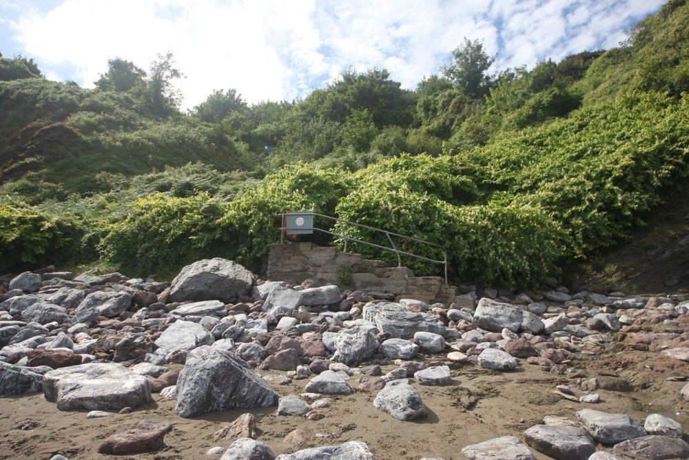 japanese knotweed infestation