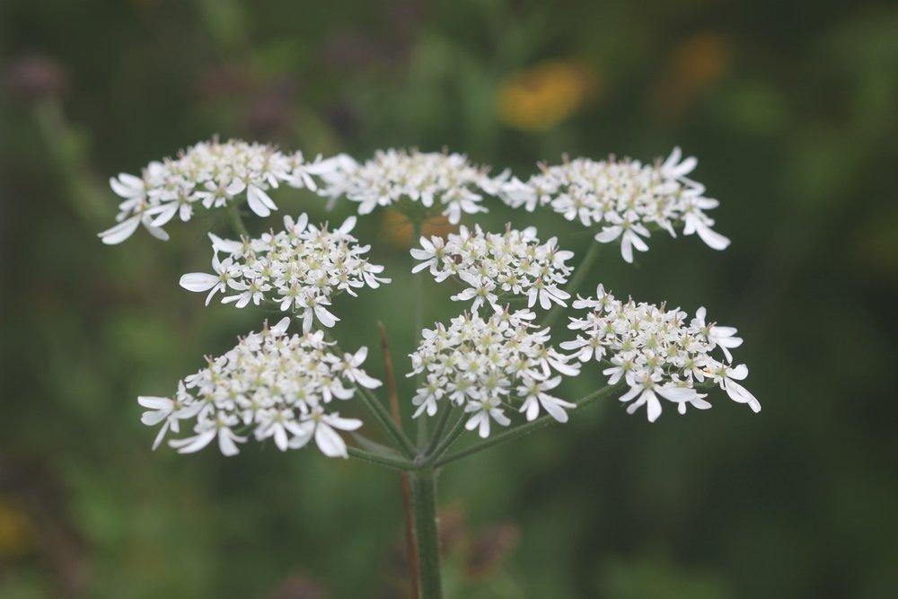 wildflowers 4.jpg