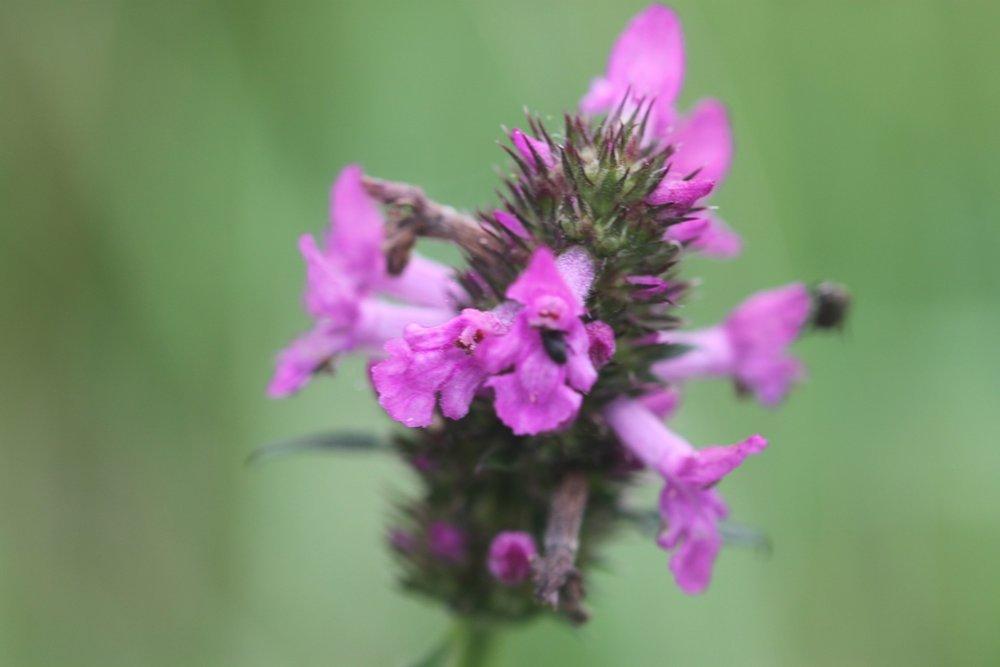 wildflowers 5.jpg