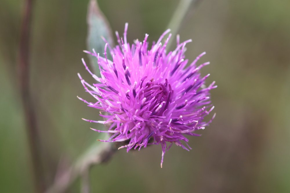 wildflowers 16.jpg