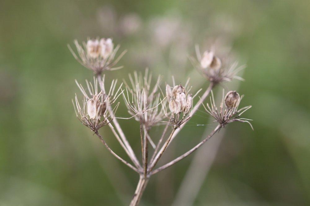 wildflowers 19.jpg