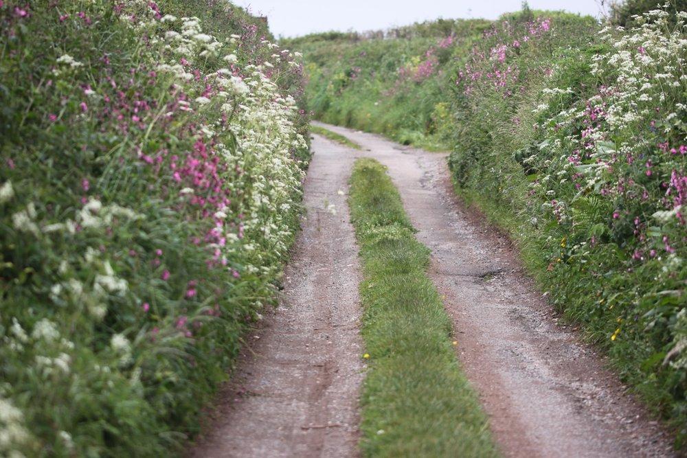 footpath full of wildflowers