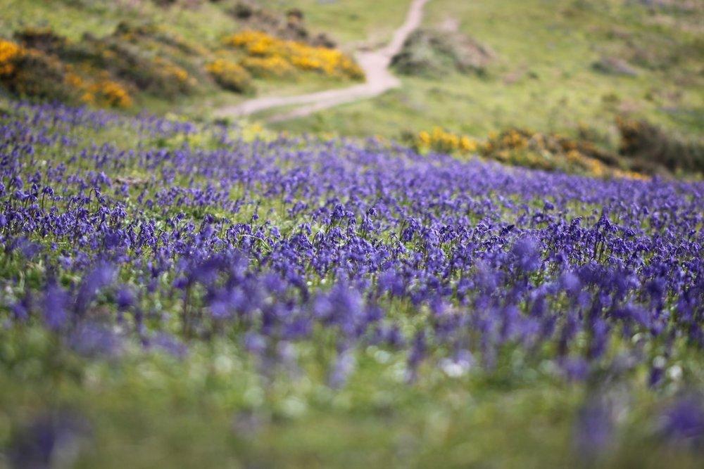 wildflowers 23.jpg