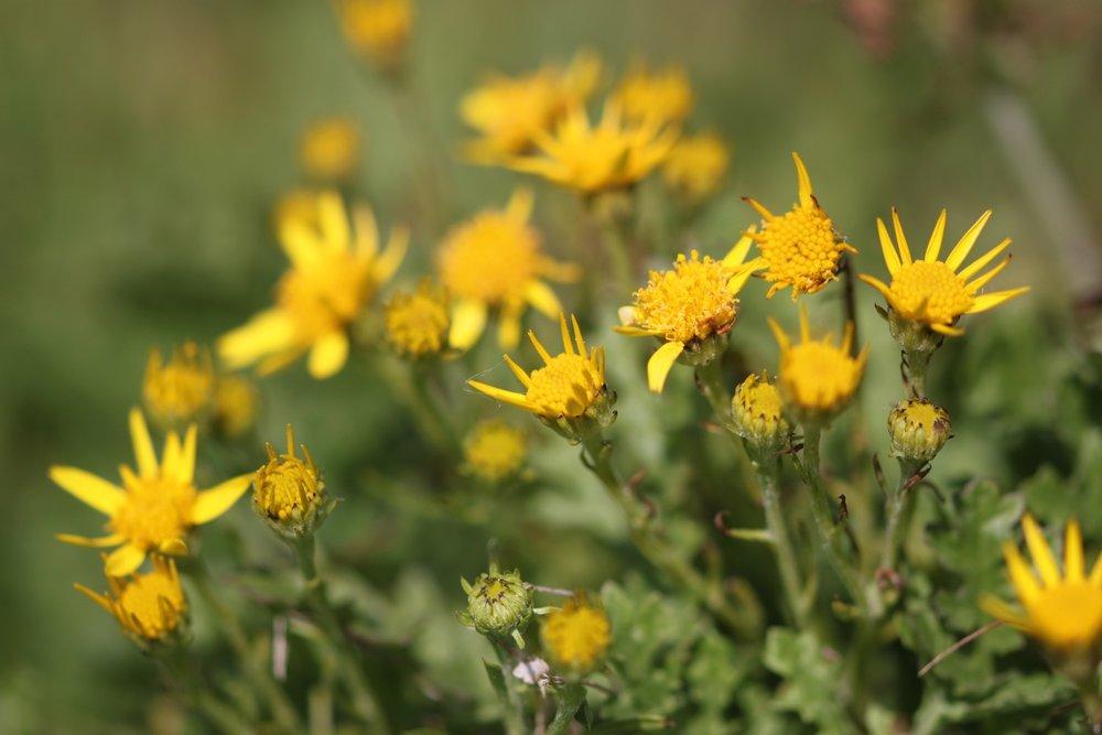 wildflowers 25.jpg