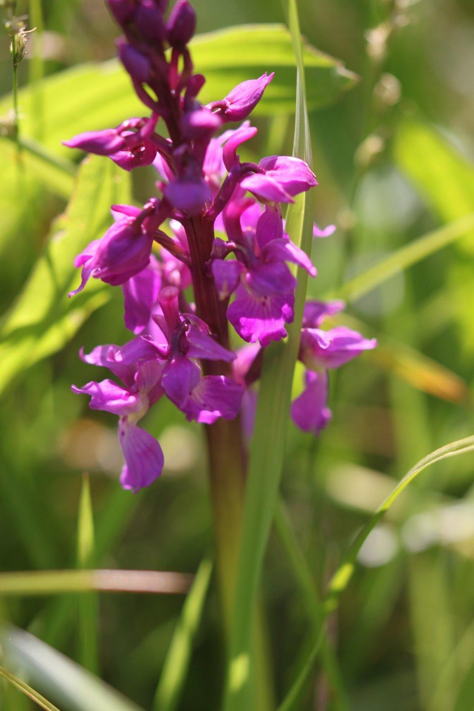 orchids 4.jpg