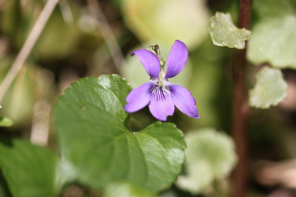 wildflowers 32.jpg