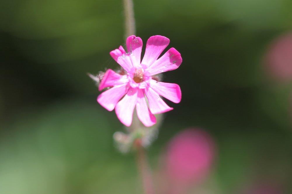 wildflowers 33.jpg