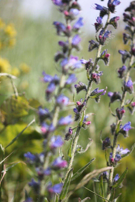wildflowers 12.jpg
