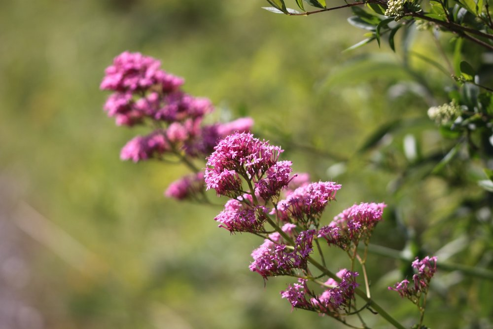 wildflowers 20.jpg