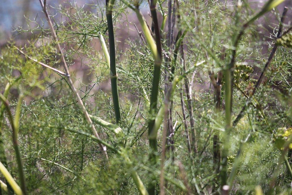 wildflowers 29.jpg