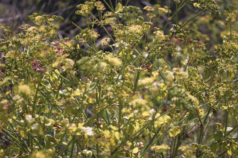 wildflowers 30.jpg