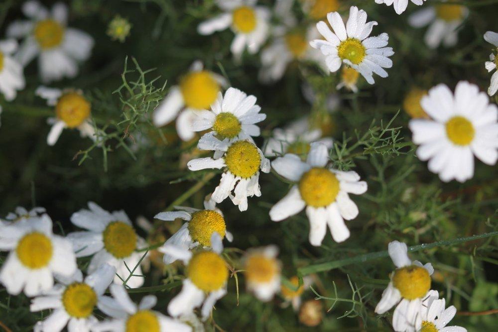 wildflowers 3.jpg
