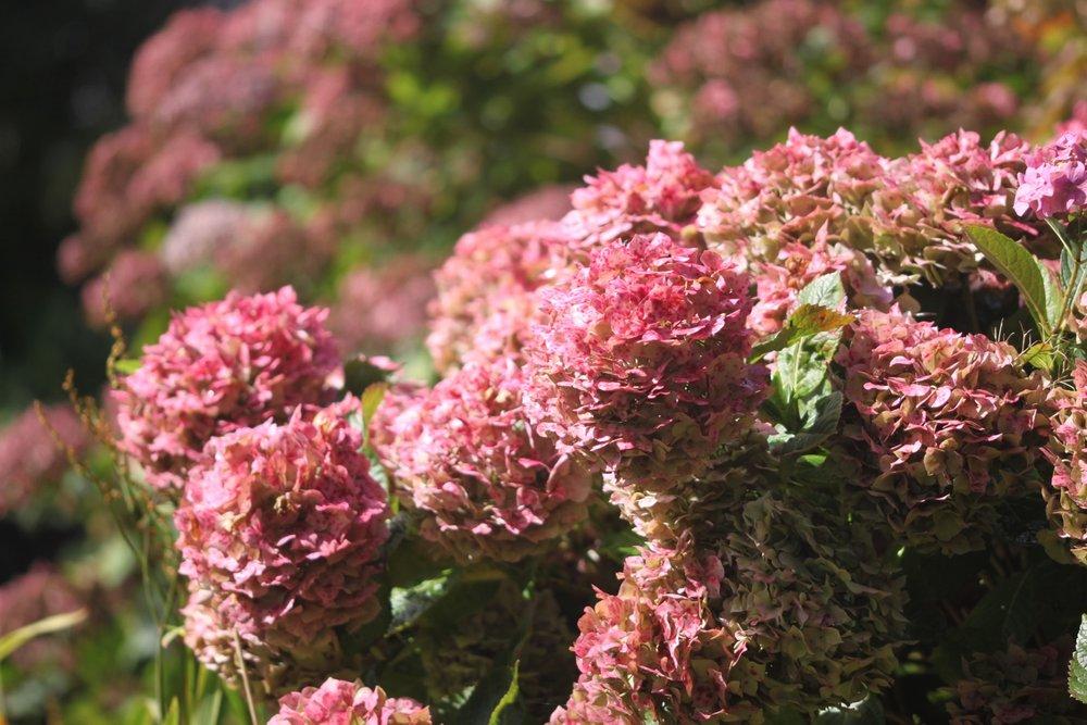 wildflowers 10.jpg