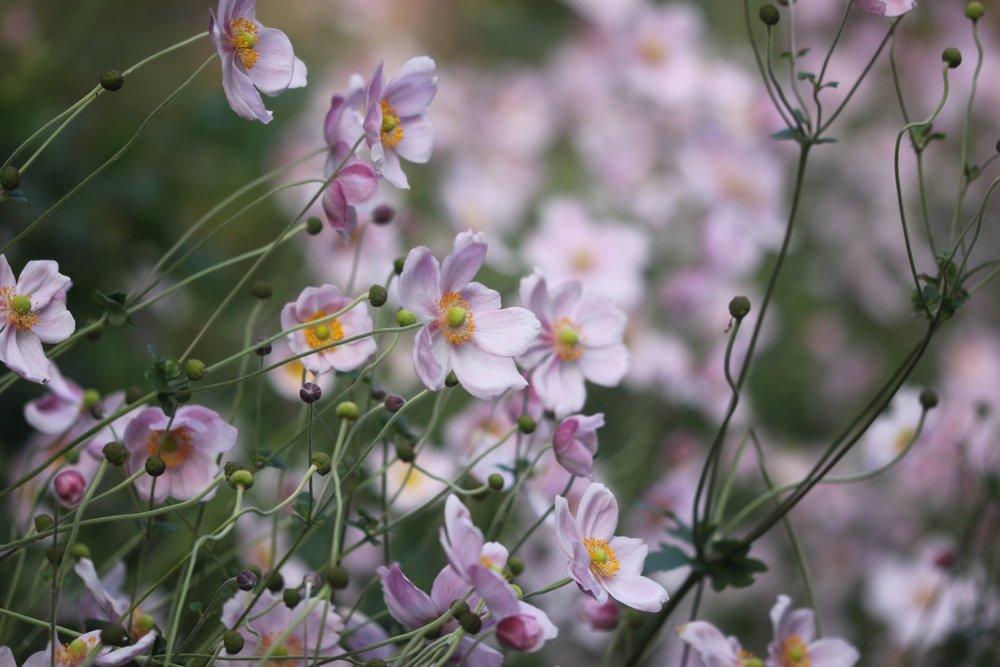 wildflowers 1.jpg
