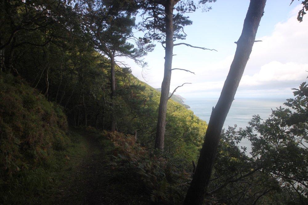 woodland path 1.jpg