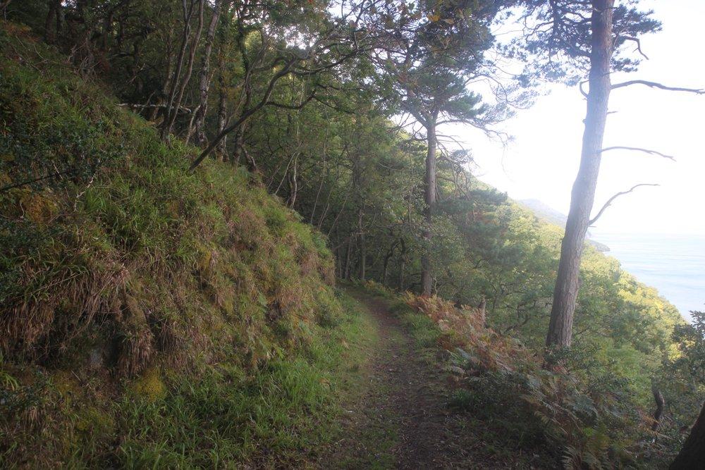 woodland path 3.jpg
